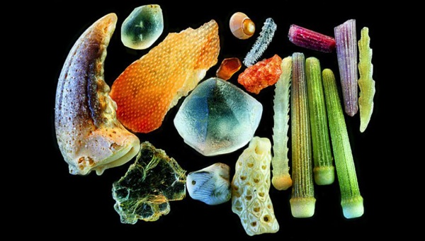 Sand grains under microscope gary greenberg 61