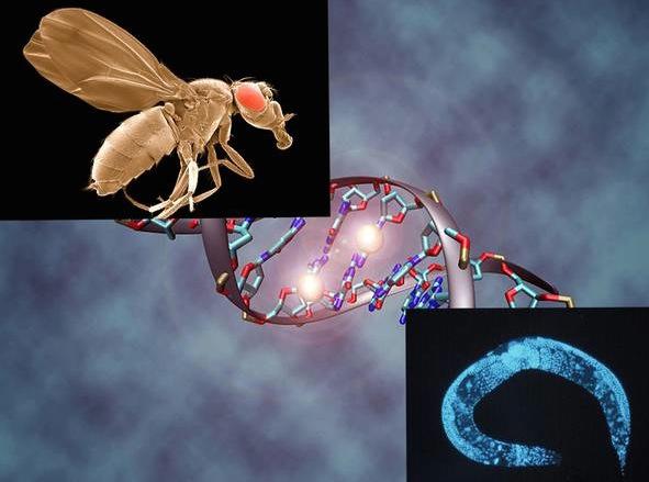 Uomo verme e moscerino gemelli diversi nel dna la - Vai gemelli diversi ...