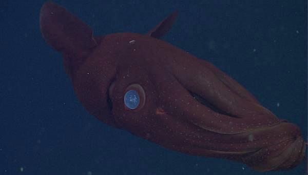 Il misterioso calamaro vampiro la macchina del tempo