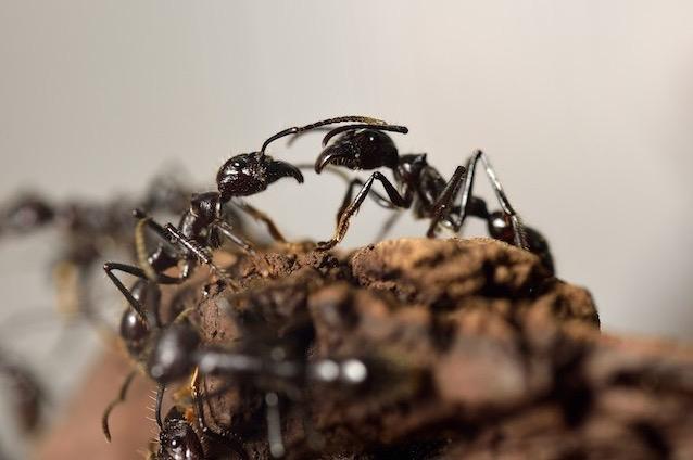 Formiche in cucina finest guarda il video come non fare entrare le formiche in casa with - Invasione di formiche in cucina ...