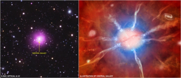 """The Phoenix Cluster is an extraordinary galaxy cluster that is breaking several important astronomical records.  The composite image on the left includes an X-ray image from Chandra (purple), an optical image from the 4-m Blanco telescope (red, green and blue), and an ultraviolet image from GALEX (blue).  This galaxy cluster has been dubbed the """"Phoenix Cluster"""" because of the constellation in which it is found, and because of its remarkable properties including an exceptionally high rate of star formation in its center.  The artist's illustration on the right depicts the cluster's central galaxy surrounded by hotter (red) and cooler gas (blue). Flowing gas is shown in the ribbon-like structures, and the newly formed stars appear as smaller blue and white dots."""