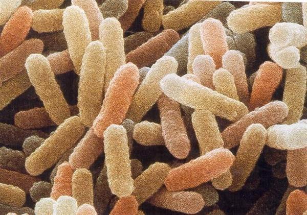 batteri-mangia-petrolio
