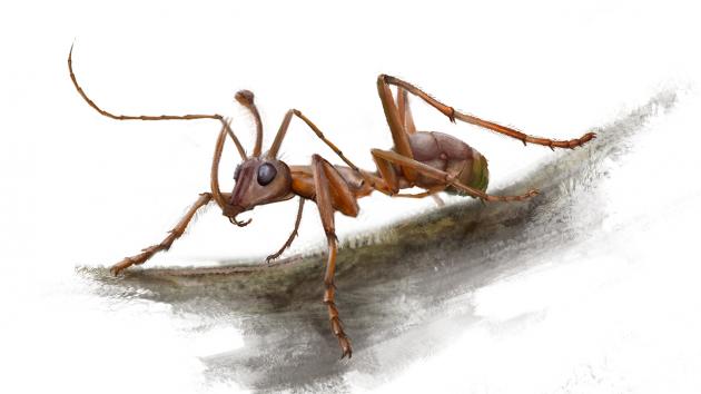 La formica unicorno del cretaceo – la macchina del tempo