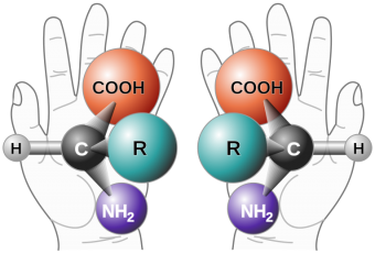 765px-Chirality_with_hands.svg_-340x231.png