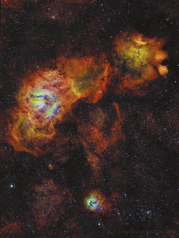 sagittarius flower.jpg
