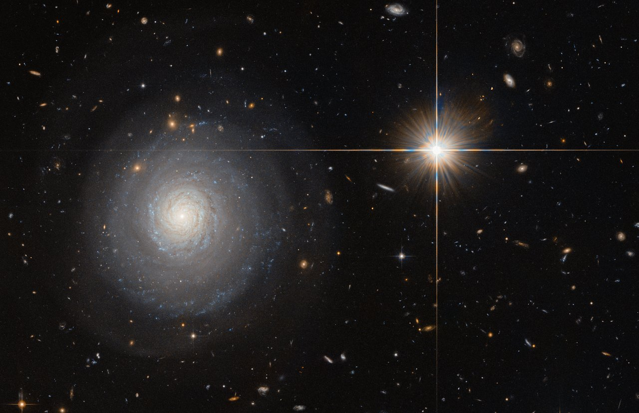 This image was taken by the NASA/ESA Hubble Space Telescope's Advanced Camera for Surveys (ACS), and shows a starburst galaxy named MCG+07-33-027. This galaxy lies some 300 million light-years away from us, and is currently experiencing an extraordinarily high rate of star formation — a starburst. Normal galaxies produce only a couple of new stars per year, but starburst galaxies can produce a hundred times more than that! As MCG+07-33-027 is seen face-on, the galaxy's spiral arms and the bright star-forming regions within them are clearly visible and easy for astronomers to study.  In order to form newborn stars, the parent galaxy has to hold a large reservoir of gas, which is slowly depleted to spawn stars over time. For galaxies in a state of starburst, this intense period of star formation has to be triggered somehow — often this happens due to a collision with another galaxy. MCG+07-33-027, however, is special; while many galaxies are located within a large cluster of galaxies, MCG+07-33-027 is a field galaxy, which means it is rather isolated. Thus, the triggering of the starburst was most likely not due to a collision with a neighbouring or passing galaxy and astronomers are still speculating about the cause.