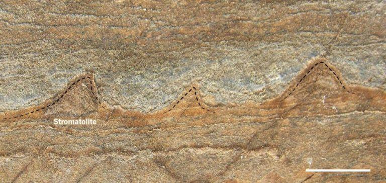 oldest-fossils-greenland-rock