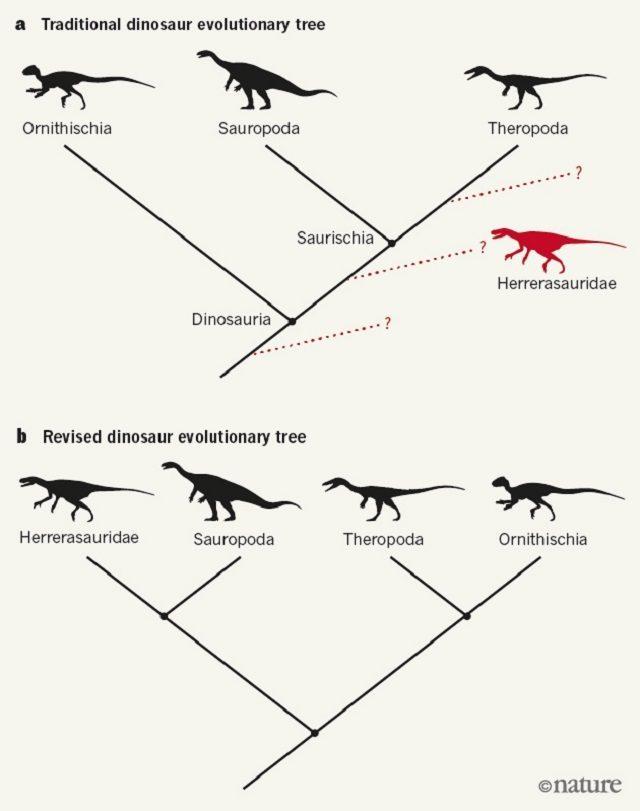 albero-evolutivo.jpg
