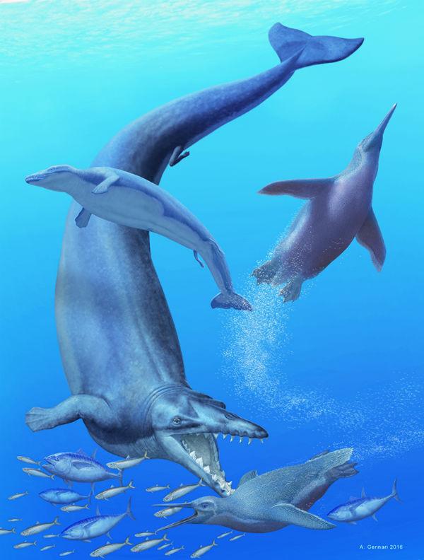 balena-piu-antica-03.jpg