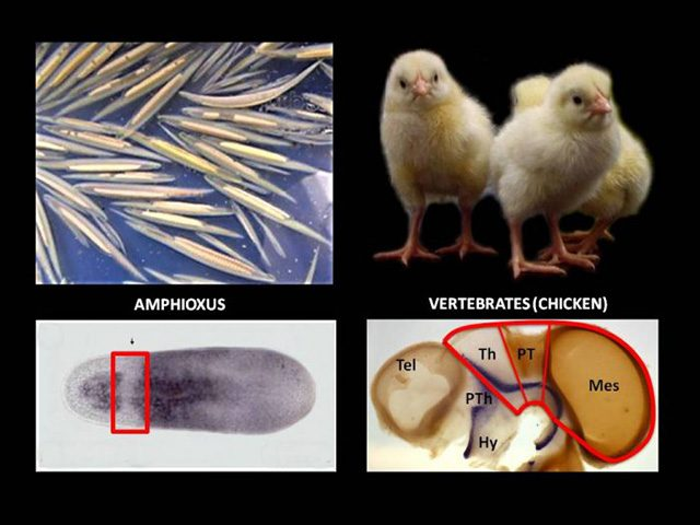 evoluzione-cervello.jpg