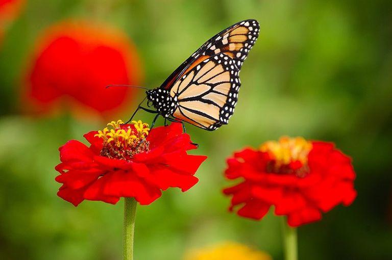 farfalla_simon.jpeg