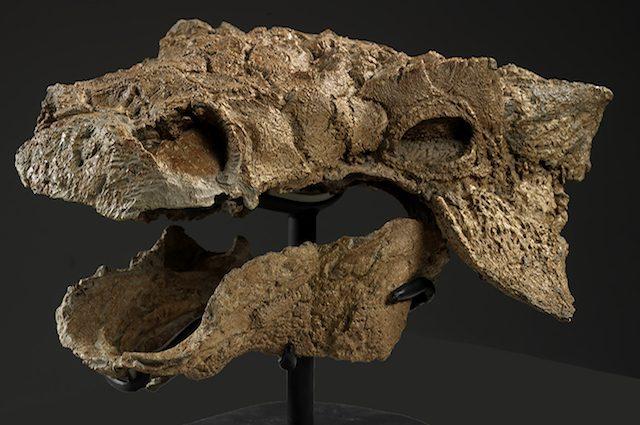 zuul-skull-nolabels.jpg