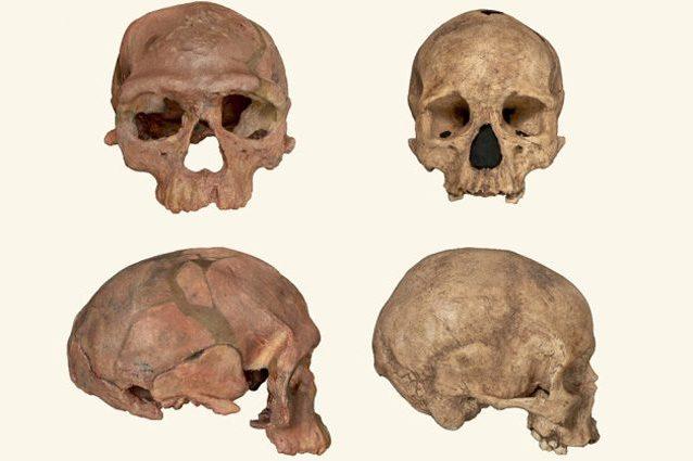 teschi-homo-sapiens-638x425