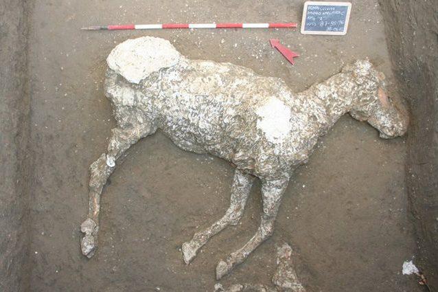 cavallo-pompei-638x425.jpg