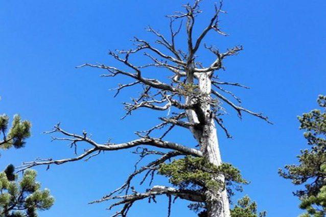 albero-copia31-638x425.jpg