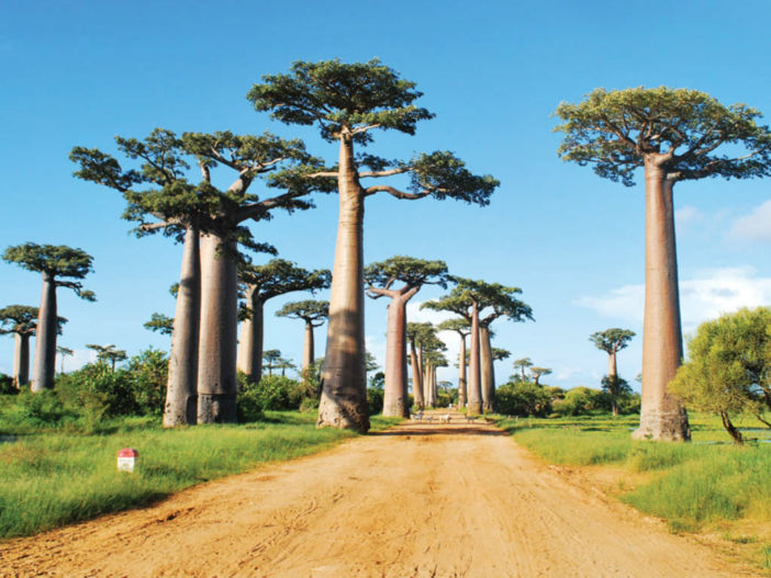Baobab-The-Largest-Succulent-Plant-in-the-World-702x527.jpg