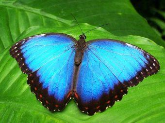 butterfly-142506_640.jpg