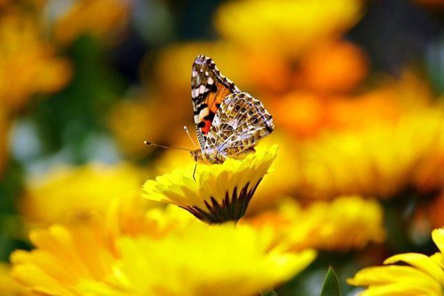 butterfly-169924_640-638x425.jpg
