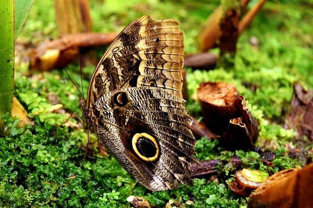 butterfly-3216533_640