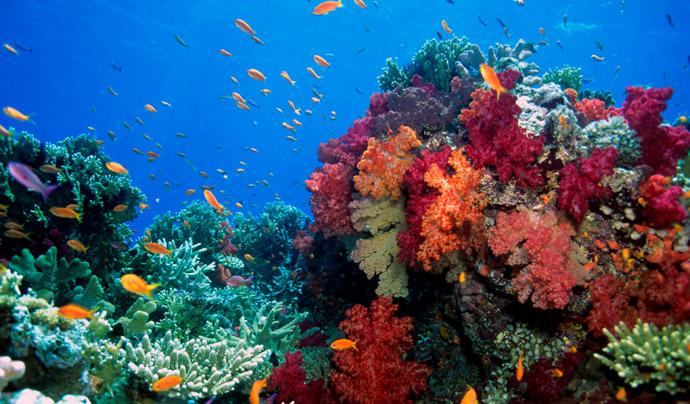I Coralli Sono Coetanei Dei Dinosauri La Macchina Del Tempo