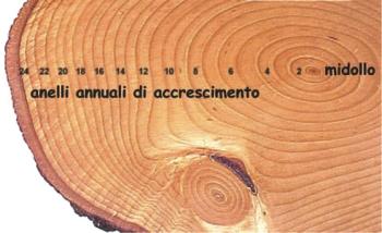 Le musa mancanti : Nera , rosa … trasparente : Cronache multicolori >  - Pagina 6 Etc3a0-albero