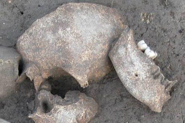 cranio-638x425.jpg