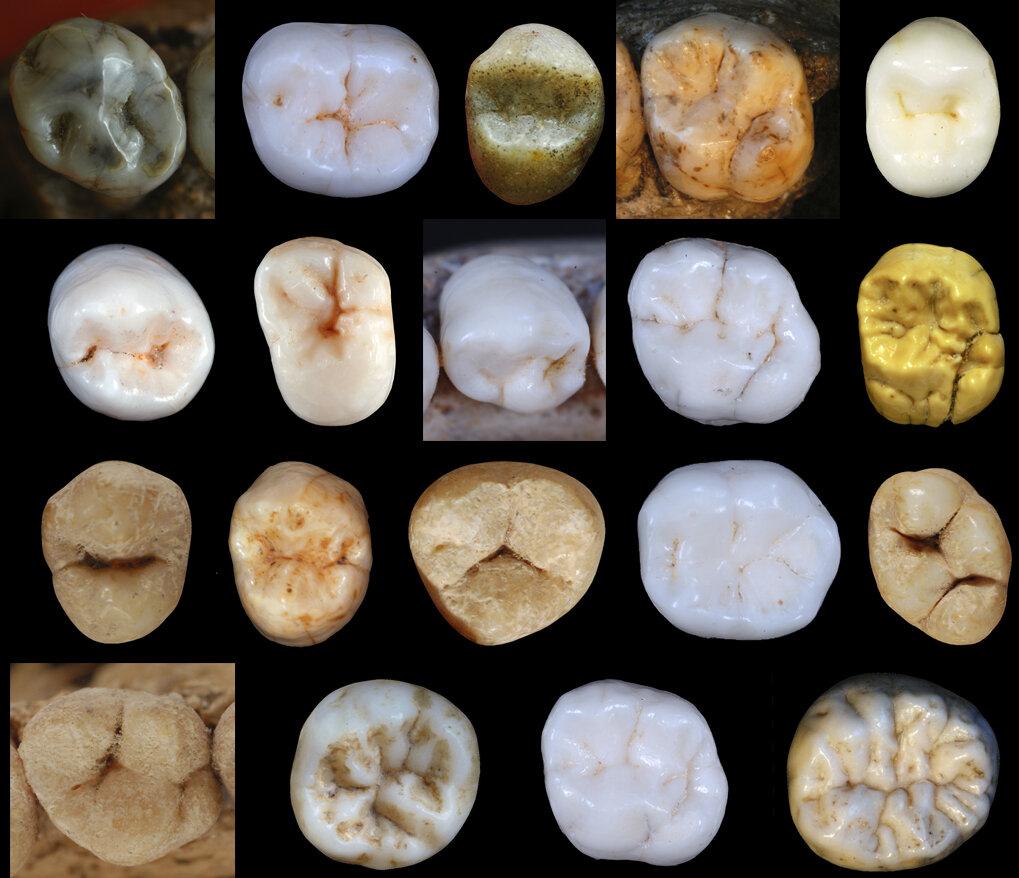 5-neanderthals.jpg