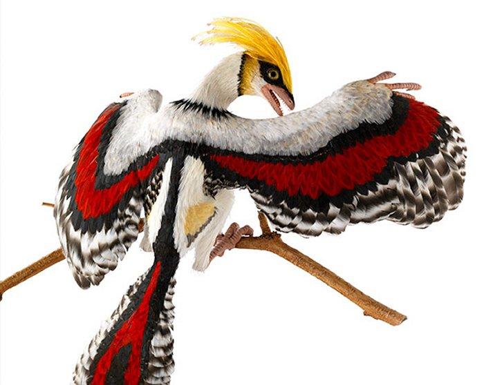 Archaeopteryx14.jpg