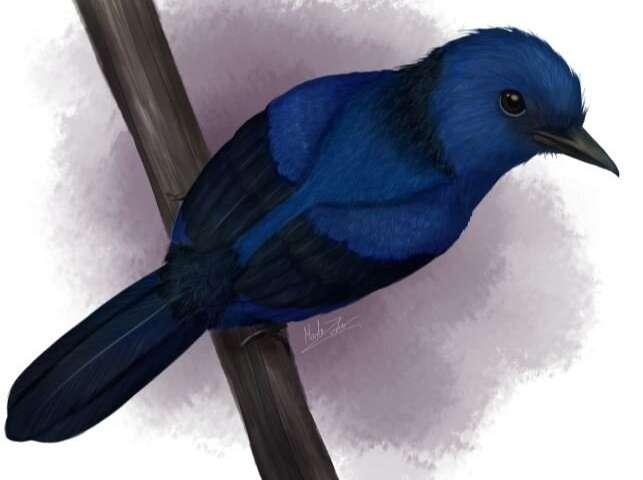 1-bluecolorton.jpg