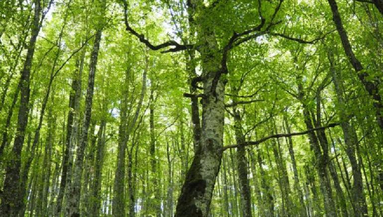 la datazione del carbonio dimostra levoluzione velocità di incontri in Gaithersburg MD