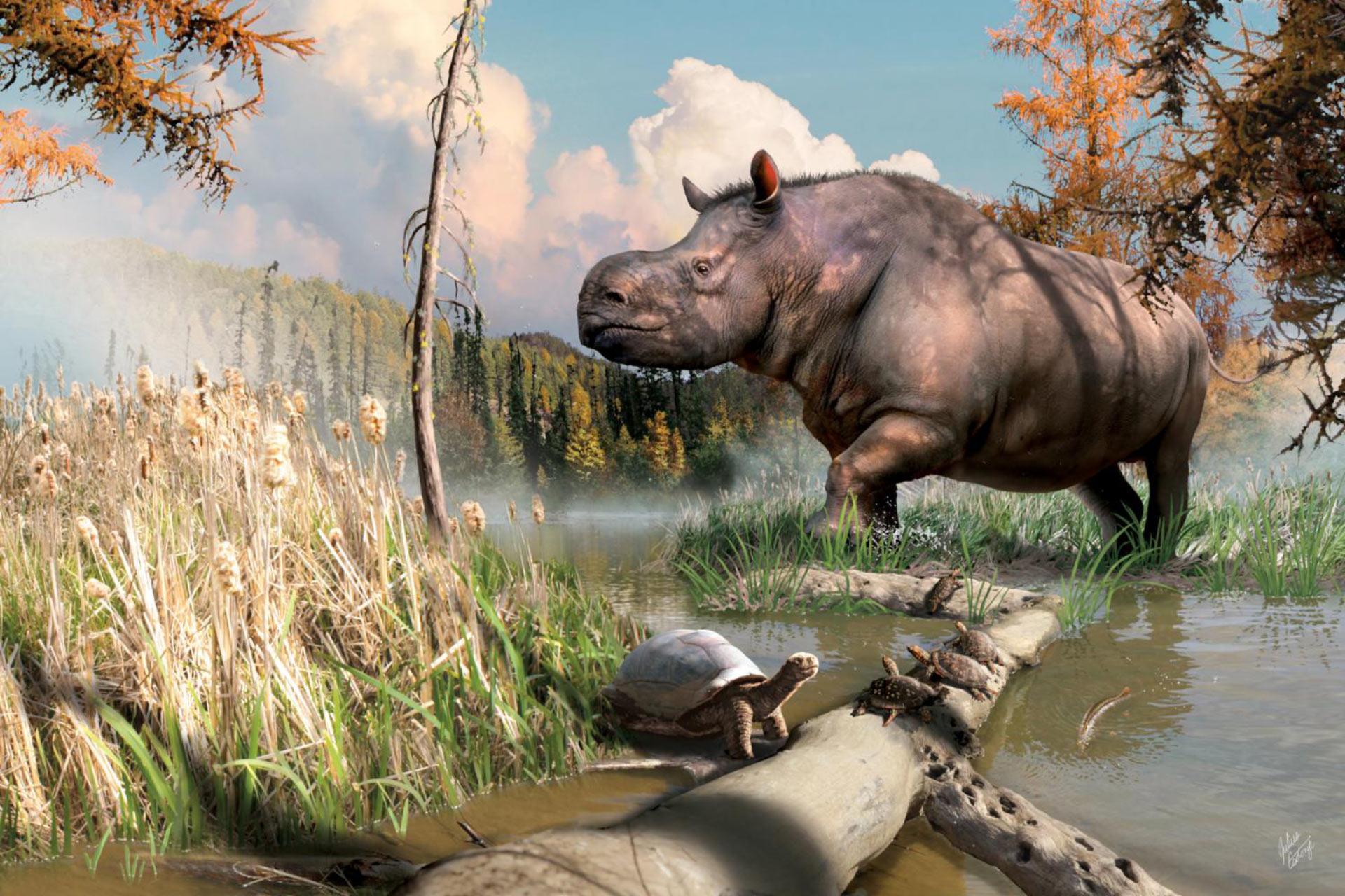 Carbonio datazione ossa di dinosauro